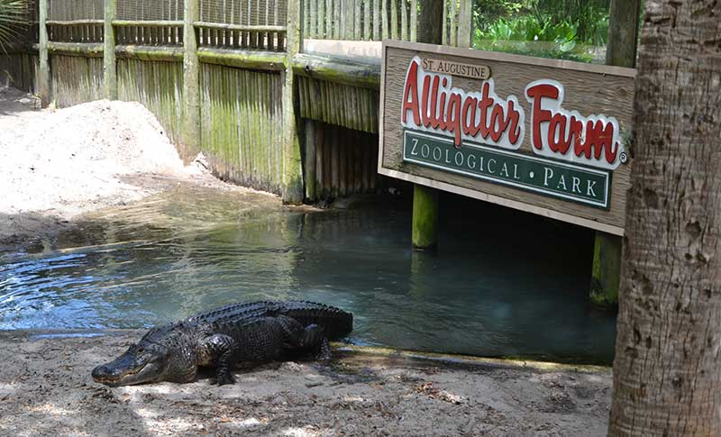 alligator farm in-saint-augustine