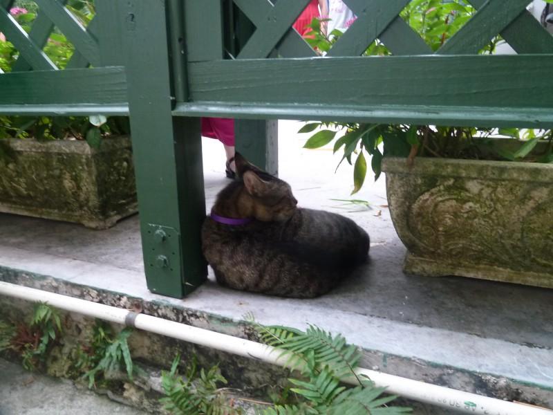 katten van hemingway