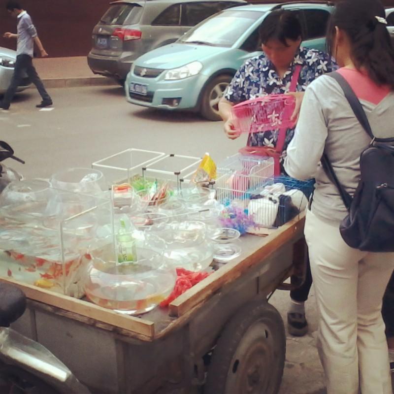 huisdieren in China