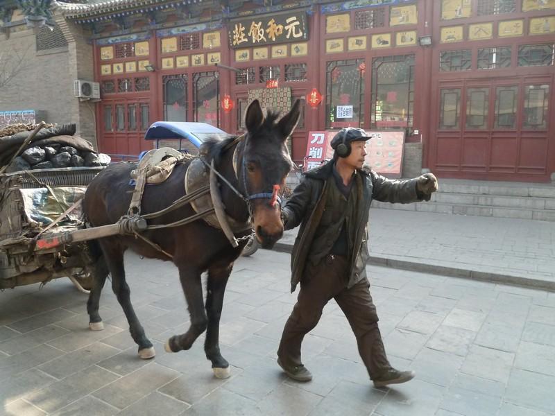 man met paard