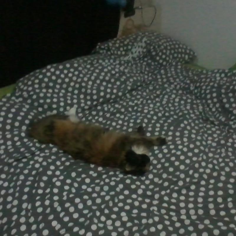 poes op bed