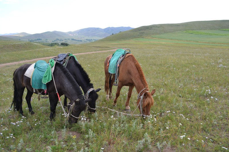 bashang grasslands
