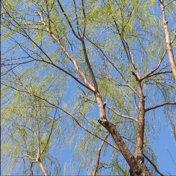voorjaar in beijing