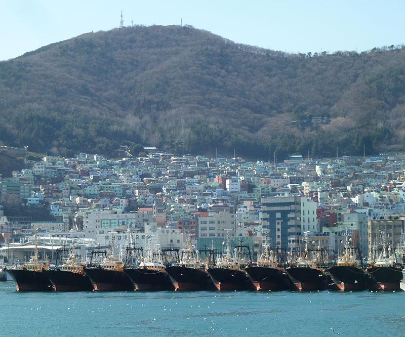 Jagalchi VisMarkt in Busan