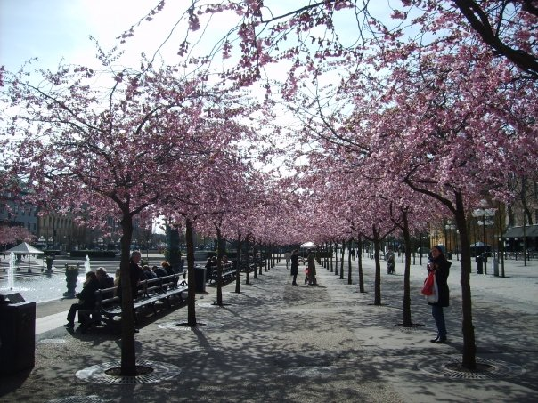 voorjaar in Stockholm