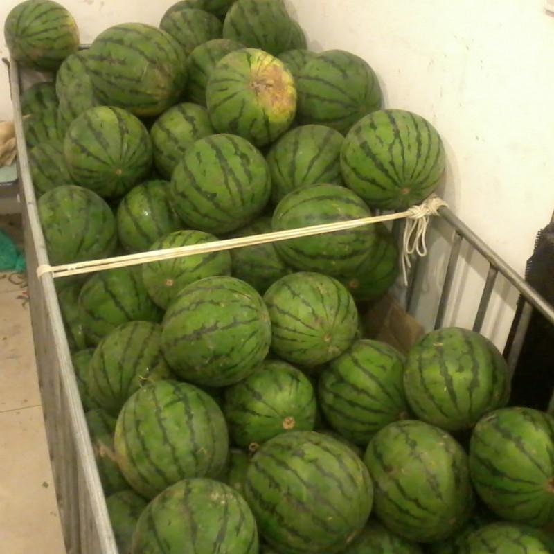 grote watermeloenen