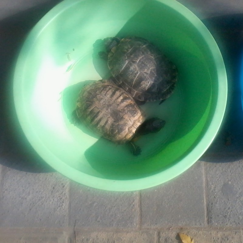 schildpadden verkopen