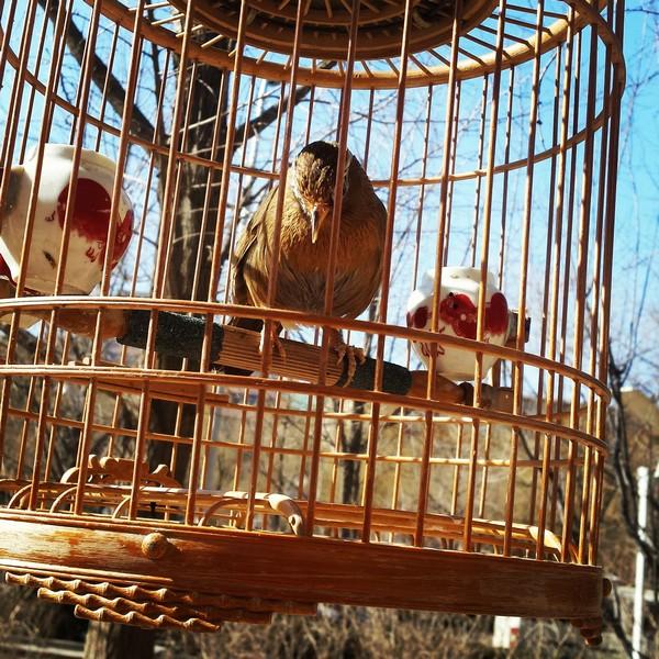 vogels in kooi