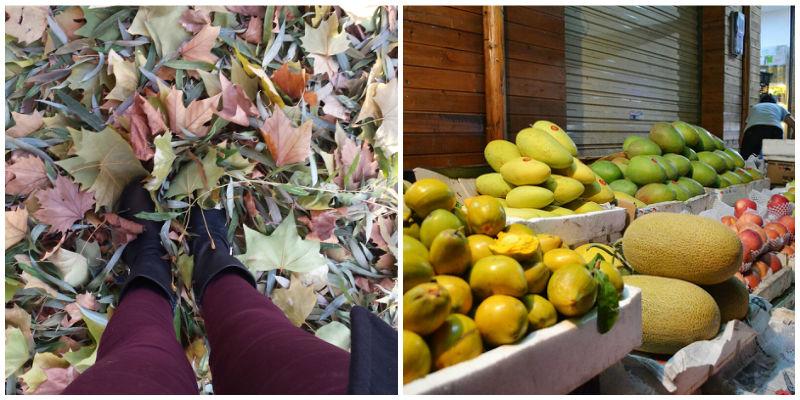 vers fruit Hainan