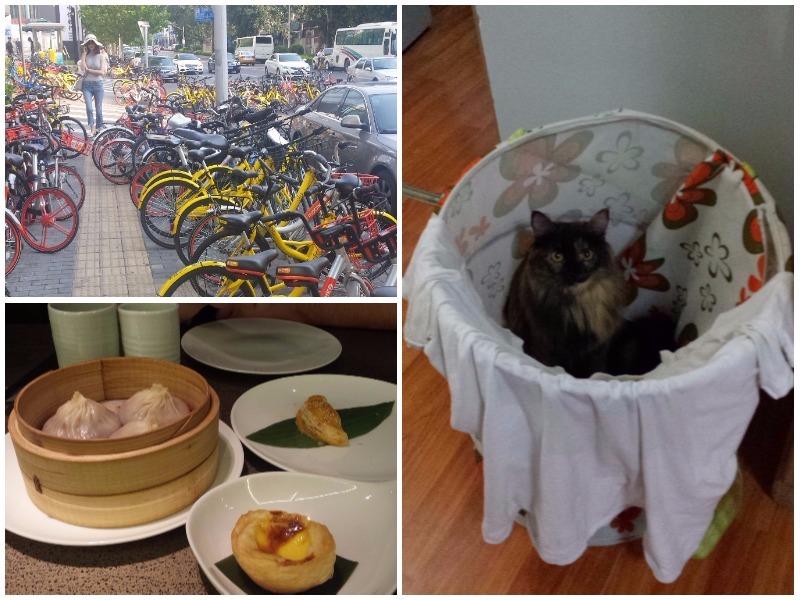 gratis fietsen in Beijing